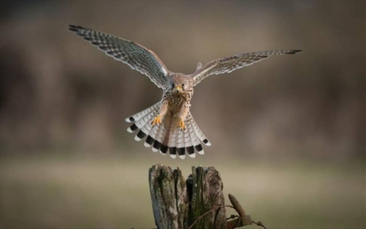 κατασκοπεία για μεγάλο πουλί
