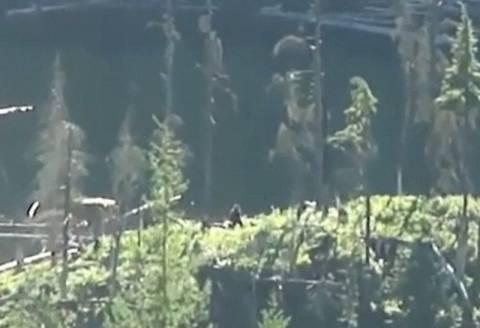 Νέο βίντεο: Ο Μεγαλόποδαρος στα δάση του Καναδά