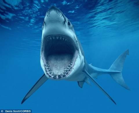 Φωτογραφία που σοκάρει:Τον κατάπιε καρχαρίας και παλεύει για να ζήσει!