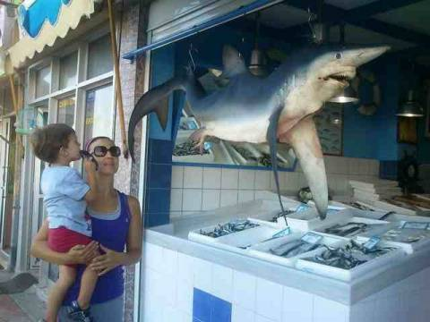 Κρήτη: Ψάρεψαν γαλέο 40 κιλών!