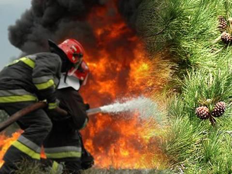 Έφτασε στο δάσος Κουβαρά η φωτιά (pics)