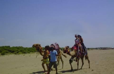 Απίστευτο: Για μπάνιο με καμήλες στην παραλία της Kαλογριάς! (vid)