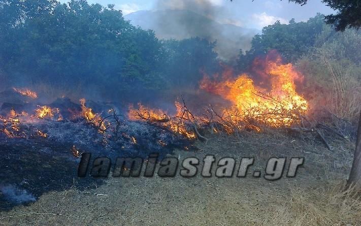 Εκτός ελέγχου η πυρκαγιά στον ελαιώνα της Άμφισσας (Pics+video)