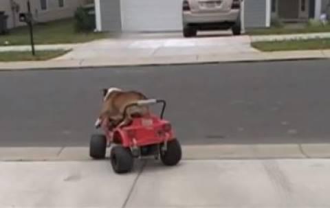 Βίντεο: Σκύλος οδηγεί… αυτοκίνητο