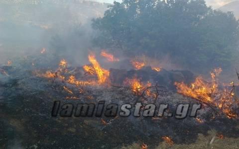 Πυρκαγιά στην Άμφισσα: Έκκληση για συνδρομή εθελοντών