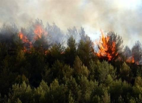 Πυρκαγιά σε αγροτοδασική έκταση στην Ηλεία
