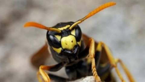Καβάλα: Χαροπαλεύει αγρότης μετά από τσίμπημα μέλισσας