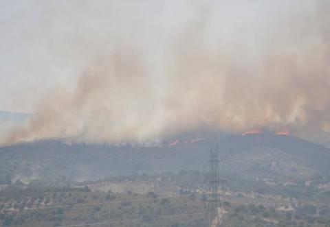 Σε ύφεση η φωτιά στην Εύβοια- Κάηκαν 1.500 στρέμματα
