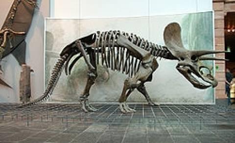 Έναντι 6 εκατ. στερλινών πουλήθηκαν οι σκελετοί δύο...