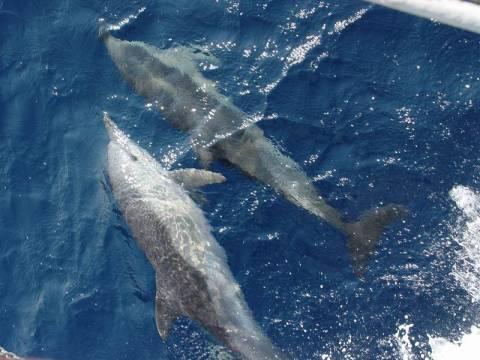 Νεκρά δελφίνια στις βουλγαρικές ακτές