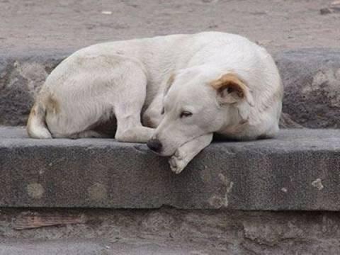 Αυτός είναι ο Πολωνός που βίασε την σκυλίτσα (pic)