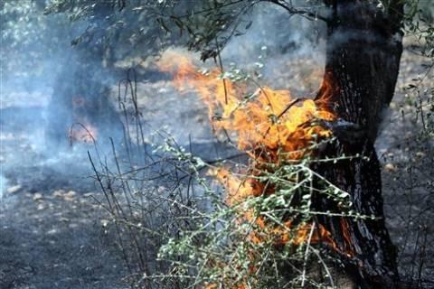 Υπό μερικό έλεγχο η φωτιά στην Μεσσηνία