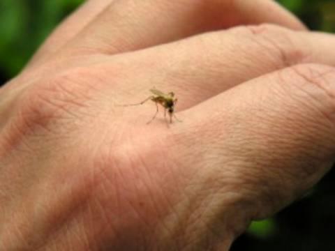 Δείτε τι συμβαίνει όταν μας τσιμπάει κουνούπι!