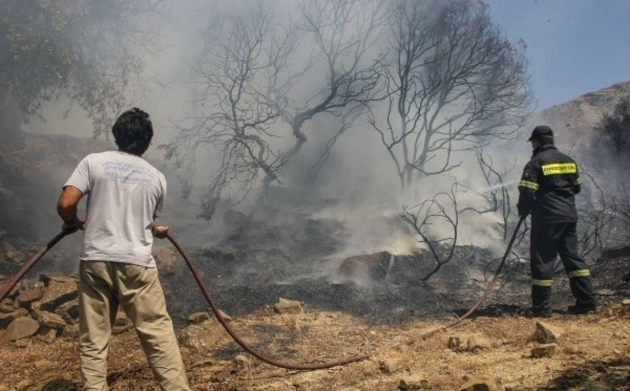 Υπό μερικό έλεγχο η πυρκαγιά στην Μεσσηνία