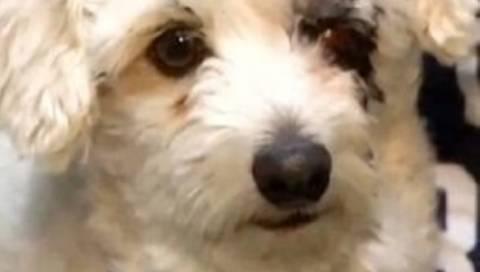 ΣΥΓΚΙΝΗΤΙΚΟ VIDEO: Σκύλος έσωσε παιδάκι από δηλητηριώδες φίδι