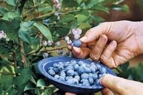 Πρόστιμο σε όσους διατηρούν σπόρους φυτών που δεν είναι εγκεκριμένοι