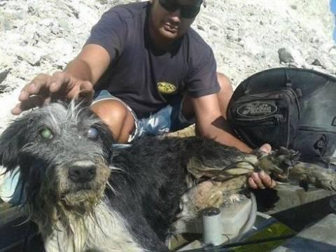Έδεσε τον τυφλό σκύλο του σε πέτρα και τον πέταξε στο ποτάμι (pics)