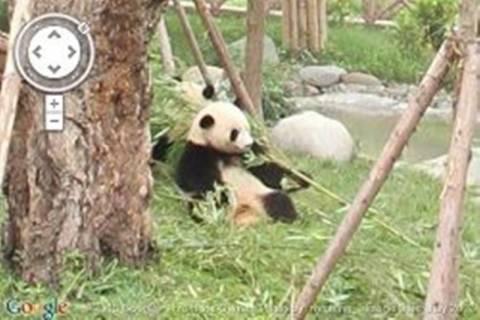 Βόλτα σε ζωολογικά πάρκα μέσω του Google Street View