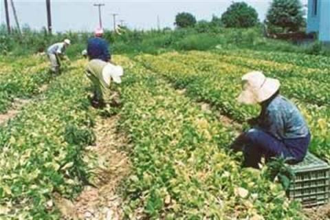 Απλοποίηση στην ένταξη δικαιούχων σε γεωργοπεριβαλλοντικές ενισχύσεις