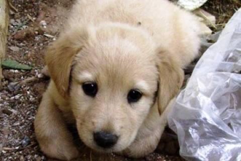 Δημοψήφισμα για την ευθανασία αδέσποτων σκύλων στο Βουκουρέστι