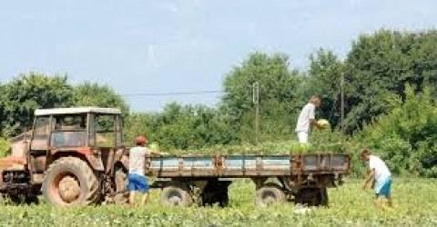 Μητρόπολη μοιράζει 400 στρέμματα σε πολίτες