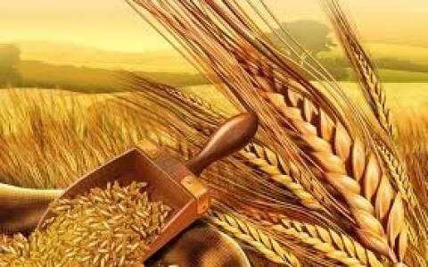 Η Αίγυπτος αγόρασε 235.000 τόνους σιταριού
