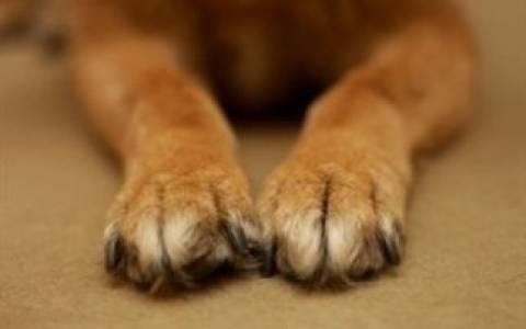 Πάτρα: Στο νοσοκομείο ένα 8χρονο που το δάγκωσε αδέσποτος σκύλος