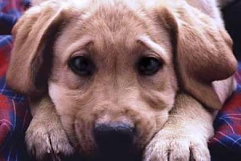Χανιά: Φόλες «θέρισαν» σκυλιά στη Χρυσή Ακτή