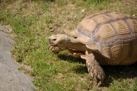 Πρέβεζα: Θαλάσσια χελώνα σαπίζει στο εμπορικό λιμάνι (ΦΩΤΟ)