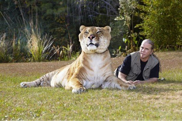 Δείτε: Ο μεγαλύτερος γάτος του κόσμου ζυγίζει... 420 κιλά! (pic)