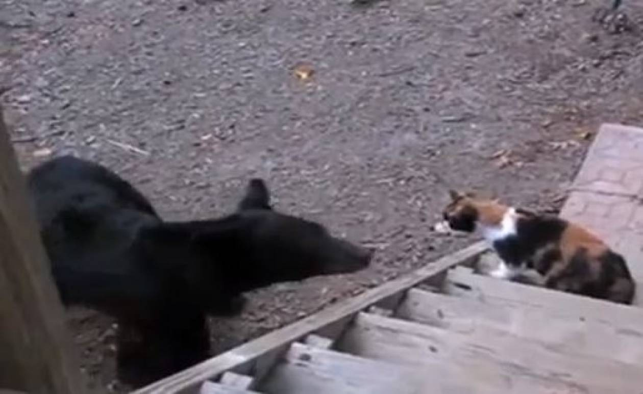 γάτα πορνό κανάλι
