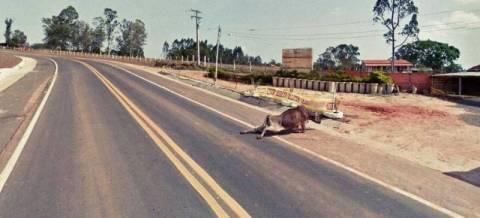Σοκαρίστηκες φωτογραφίες κατέγραψαν οι κάμερες της Google Street View