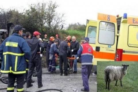 Κρήτη: Τουρίστρια τράκαρε με πρόβατο