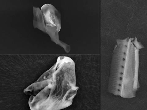 Επιστήμονες υποστηρίζουν ότι βρήκαν απόδειξη εξωγήινης ζωής