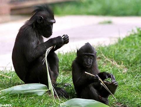 Απαγορεύτηκαν τα ρούχα που θυμίζουν δέρμα ζώων σε ζωολογικό κήπο