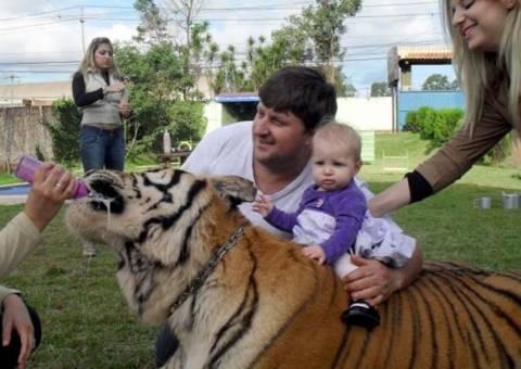 Δείτε την οικογένεια που ζει με 7 τίγρεις