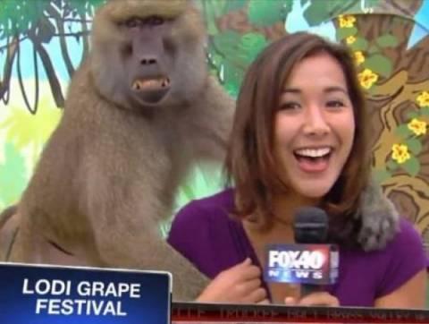 Όταν ρεπόρτερ δέχτηκε σεξουαλική παρενόχληση από... μπαμπουίνο!