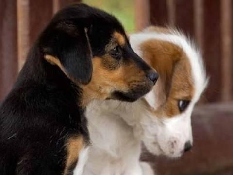 Κάλεσμα ενημέρωσης από φιλοζωικές με αφορμή την Παγκόσμια Ημέρα Ζώων