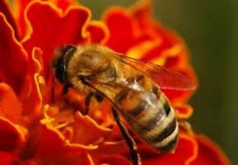 Πενθήμερο σεμινάριο μελισσοκομίας στη Κέρκυρα
