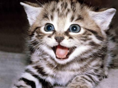 Επιχείρηση για τη διάσωση γάτας στην Αμαλιάδα!