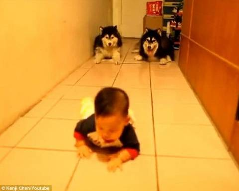 Απίστευτο βίντεο! Σκύλοι...συνδράμουν μωρό στο μπουσούλημα!
