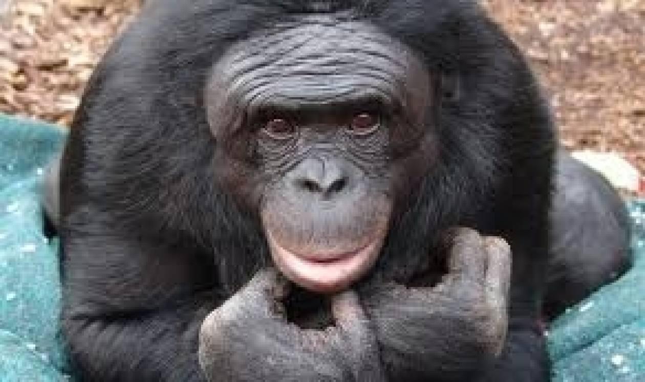 Το Ιράν θα εκτοξεύσει στο διάστημα δεύτερο πίθηκο