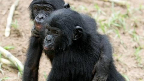 Βίντεο: Πίθηκοι κάνουν μαθήματα αντιμετώπισης του άγχους!