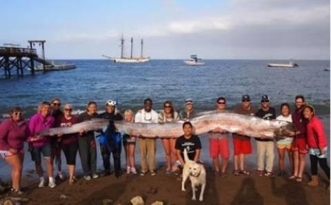 Χέλι-τέρας ξεβράστηκε στις ακτές της Καλιφόρνια (vid)
