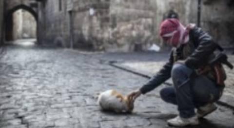 ΣΟΚ: Κληρικοί επέτρεψαν την κατανάλωση τροφής σκύλων στην Συρία