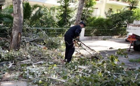 Θεσσαλονίκη: Πτώσεις δέντρων λόγω ισχυρών ανέμων
