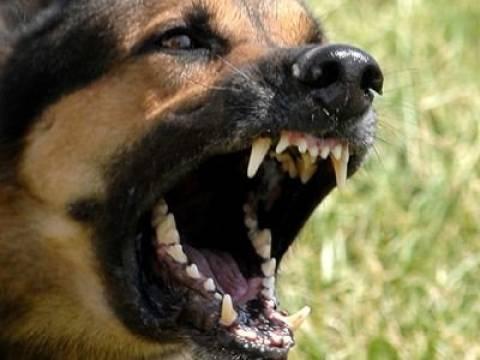 Ορχομενός: Στο νοσοκομείο 2χρονο αγοράκι έπειτα από επίθεση σκύλου