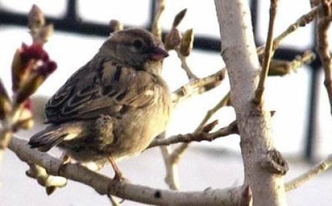 Καταγγελίες για παράνομη παγίδευση άγριων πτηνών στην Κύπρο