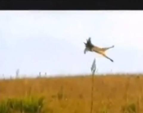 Μεγάλο πουλί κυνηγός