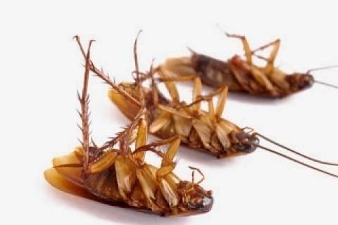 Πώς να απαλλαχτείτε από τις κατσαρίδες